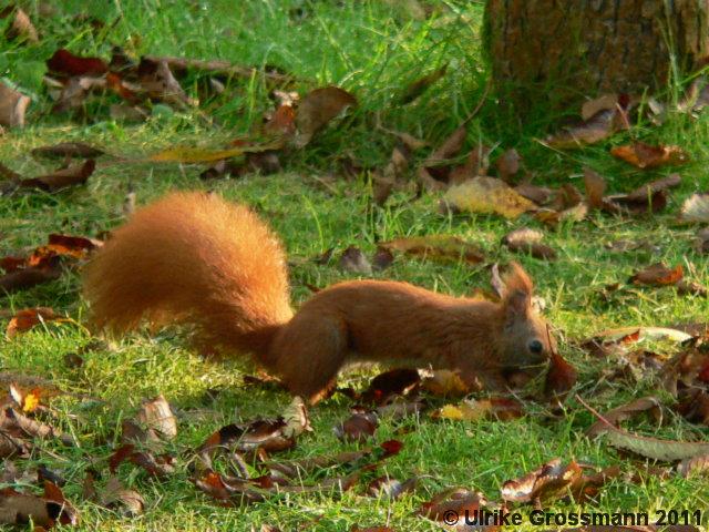Eichhörnchen Im Garten : tiere naturschutz im garten ~ Watch28wear.com Haus und Dekorationen